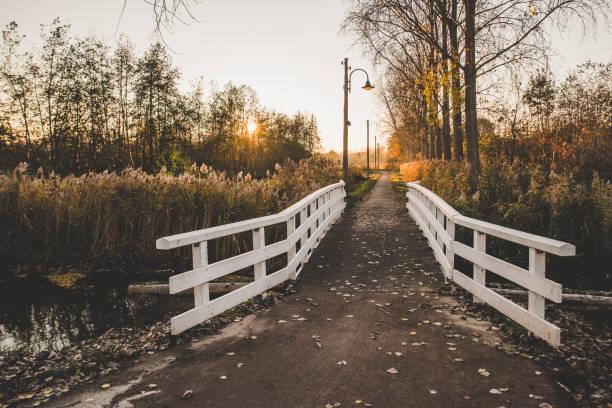 mooi herfst landschap bij zonsondergang in het bos van hacke, eindhoven city, holland. - eindhoven stockfoto's en -beelden