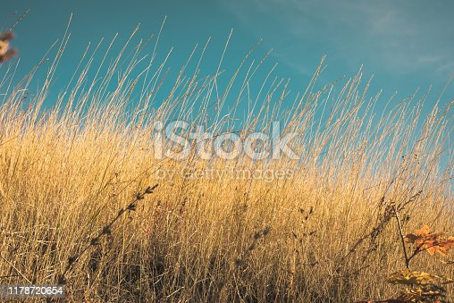 Beautiful autumn landscape - dry steppe and desert grass close-up