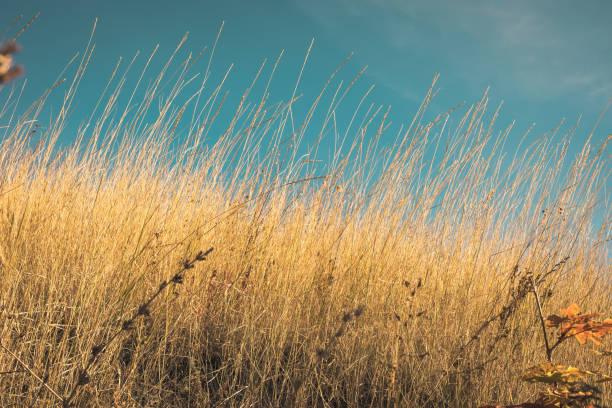 Paisagem bonita do outono-close-up seco da grama do estepe e do deserto - foto de acervo