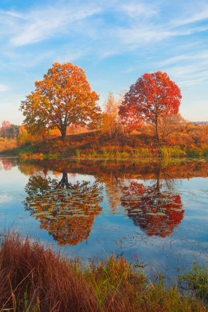 Beautiful autumn landscape, forest lake with reflection. stock photo