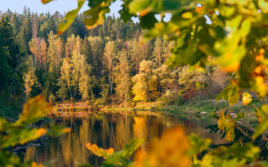 Beautiful autumn landscape on Gauja river with bright colorful foliage at sunny autumn day.