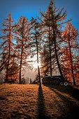 Beautiful Autumn Landscape With Sun Rays. Sunlight Sunbeams Through Woods In Forest Landscape.