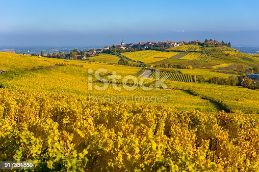 925850210istockphoto Beautiful autumn landscape with vineyards near the historic village of Riquewihr, Alsace, France - Europe. Colorful travel and wine-making background. 917331880