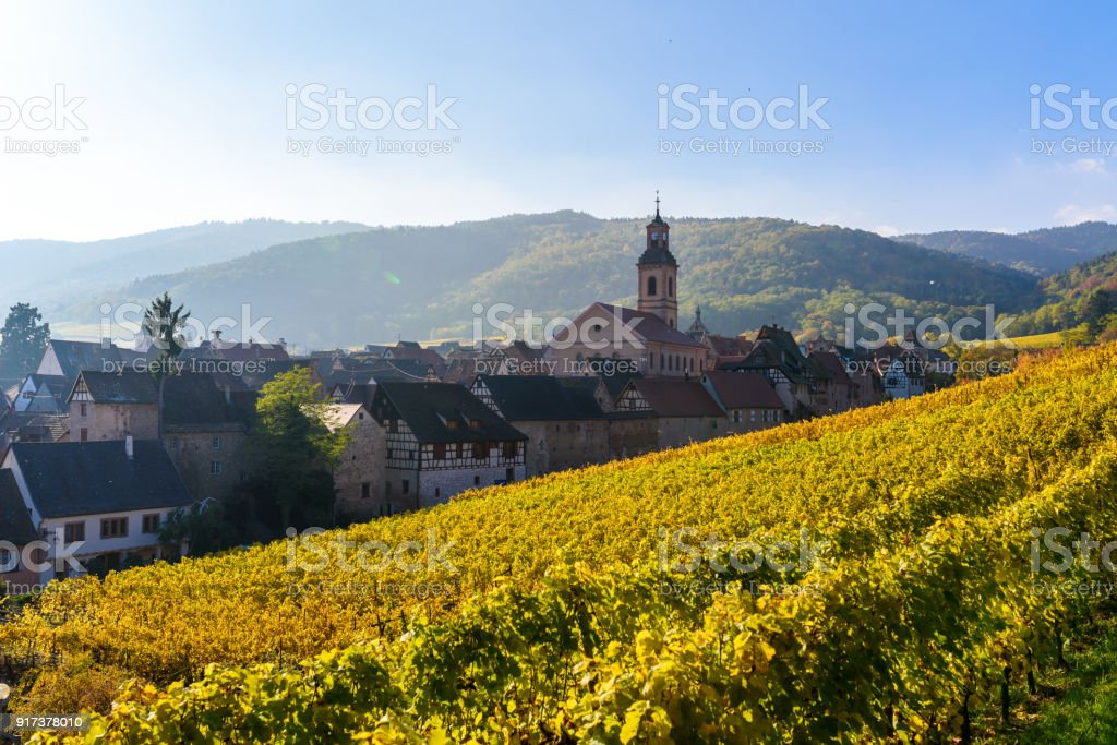 Beautiful autumn landscape with vineyards near the historic village of Riquewihr, Alsace, France - Europe. Colorful travel and wine-making background. - foto stock