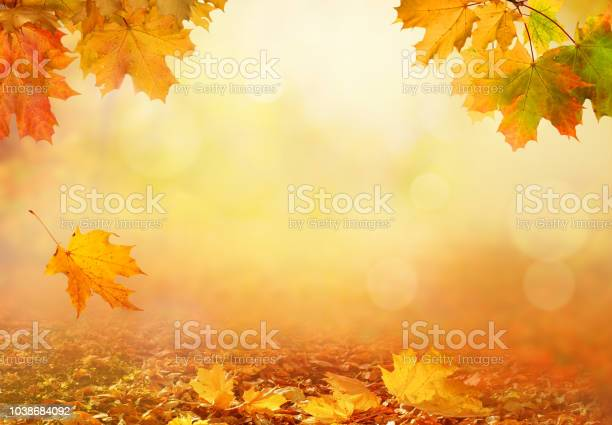 Beautiful autumn landscape with yellow treesgreen and sun colorful picture id1038684092?b=1&k=6&m=1038684092&s=612x612&h=reib8vultgcappo  lb uouwzjae9mxisytzq2b 8re=