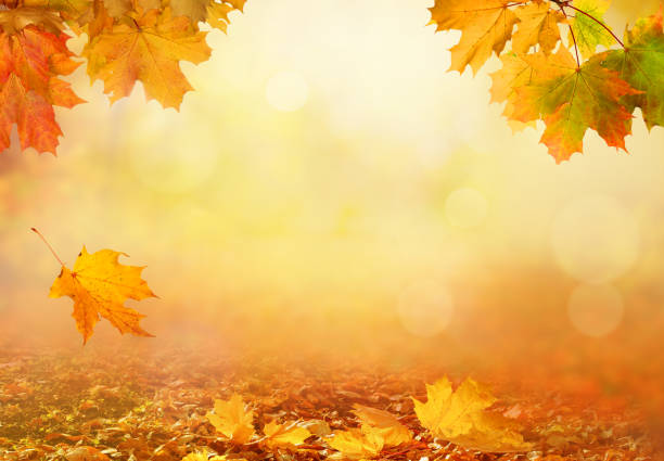 beautiful autumn landscape with yellow trees,green and sun. colorful foliage in the park. falling leaves natural background - autumn stock pictures, royalty-free photos & images