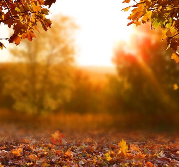 paisagem bonita do outono com árvores, o verde e o sol amarelos. folha colorida no parque. fundo natural das folhas de queda - outono - fotografias e filmes do acervo