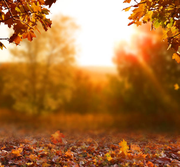 schöne herbstlandschaft mit gelben bäumen, grün und sonne. buntes laub im park. fallende blätter natürlichen hintergrund - herbst stock-fotos und bilder