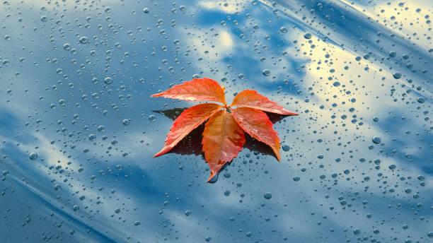 Ein schönes Herbstblatt, das auf der polierten Motorhaube eines sauberen Autos liegt – Foto