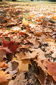 Beautiful Autumn Leaves at the park in Ontario Canada