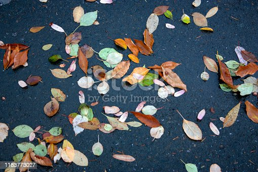 Beautiful autumn leaves scattered on wet asphalt