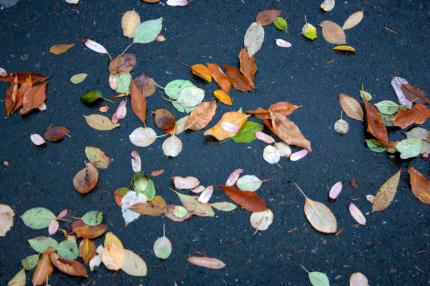 Beautiful autumn leaves scattered on wet asphalt stock photo