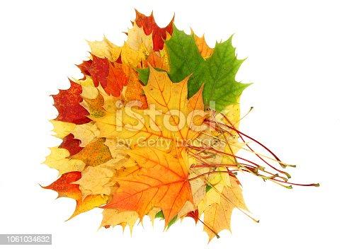 istock Beautiful autumn maple leaves isolated on white background 1061034632