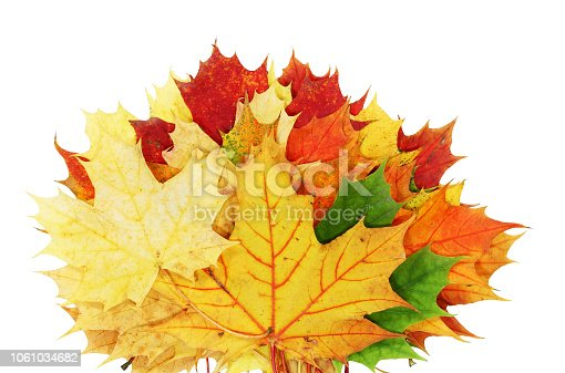 istock Beautiful autumn maple leaves isolated on white background 1061034682