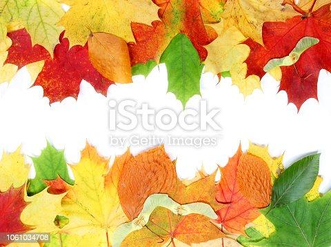 istock Beautiful autumn maple leaves isolated on white background 1061034708