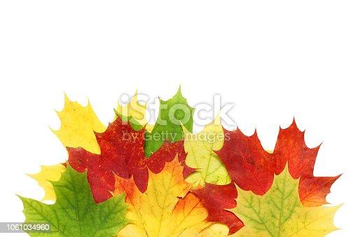 istock Beautiful autumn maple leaves isolated on white background 1061034960