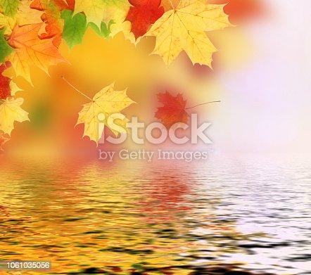 istock Beautiful autumn maple leaves isolated on white background 1061035056