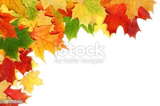 istock Beautiful autumn maple leaves isolated on white background 1061036404
