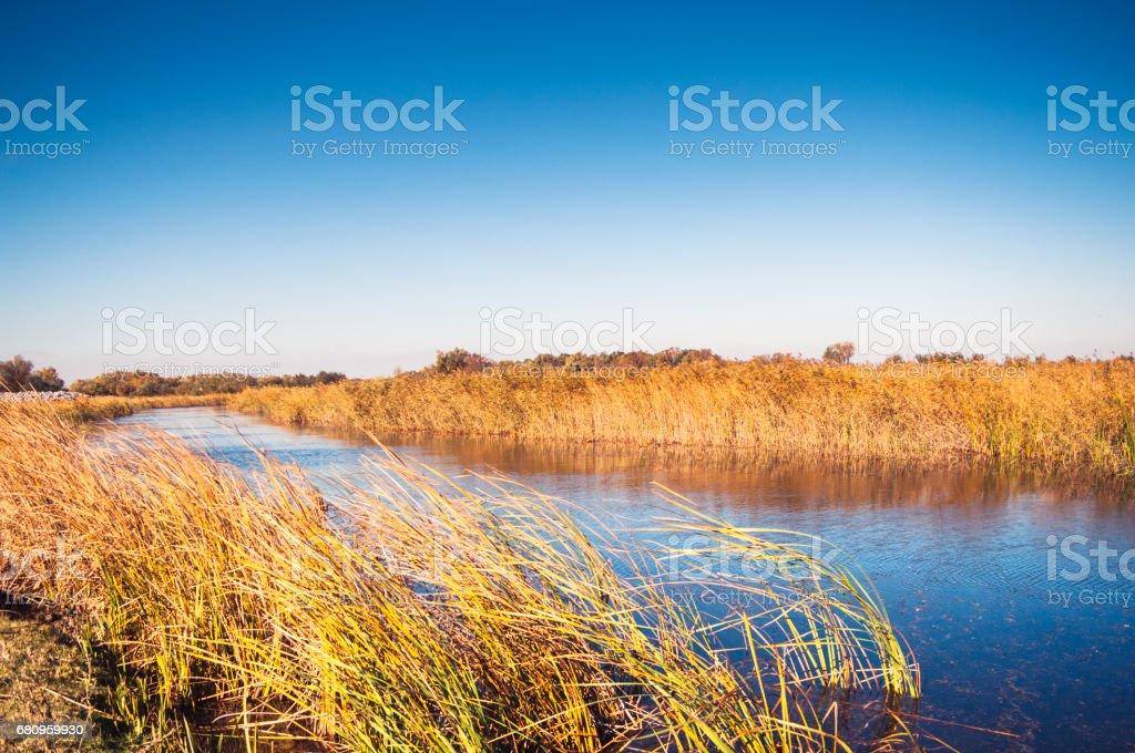 Beautiful Autumn Marsh (Delta) Landscape royalty-free stock photo