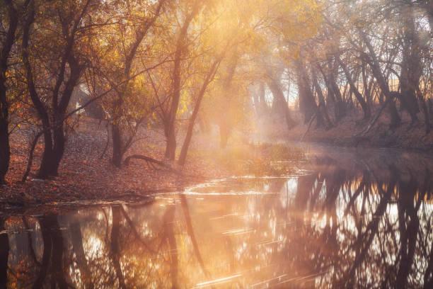 Beautiful autumn morning on scenic river stock photo