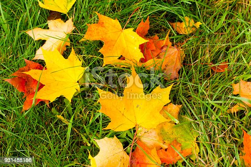 istock Beautiful autumn park with yellow maple leaves. 931488186