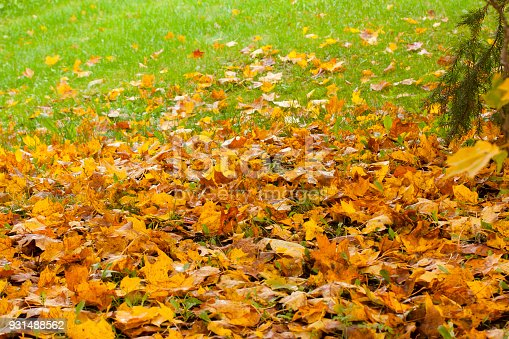 istock Beautiful autumn park with yellow maple leaves. 931488562