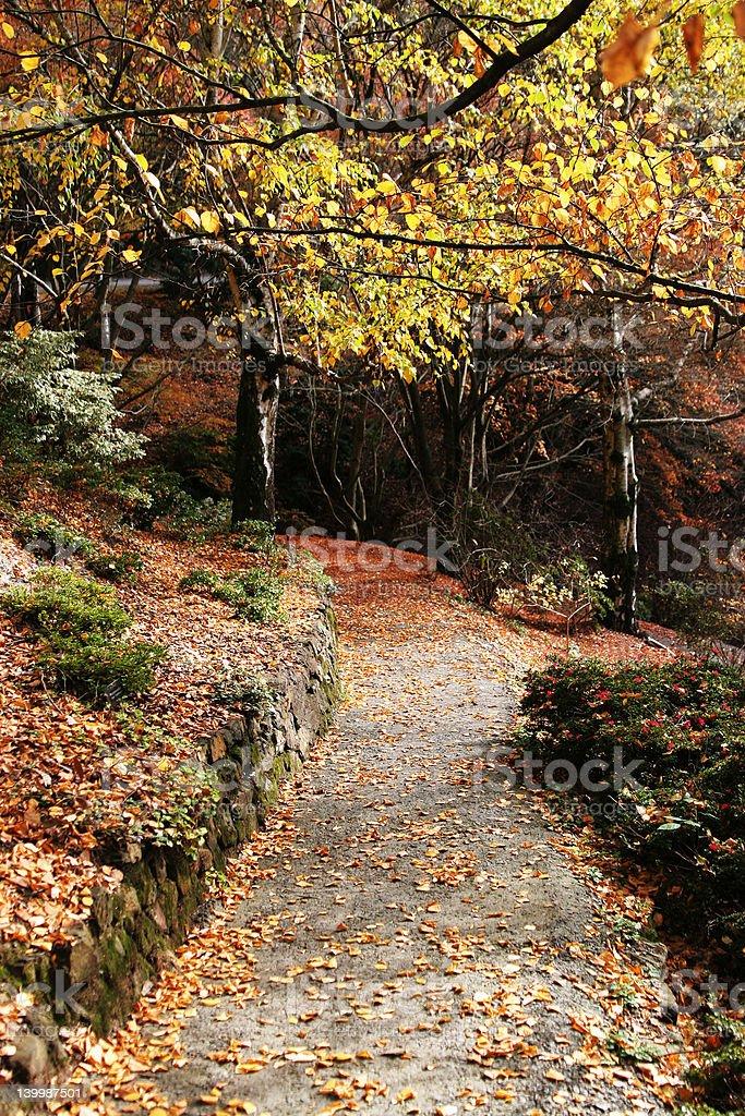 Beautiful autumn path royalty-free stock photo