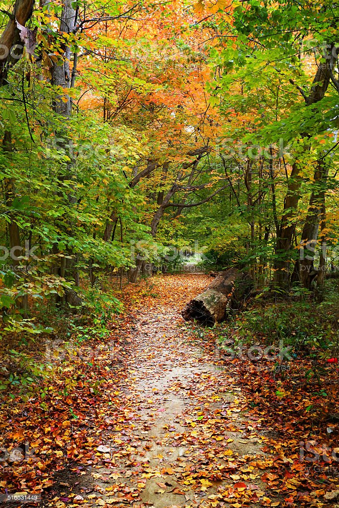 Beautiful Autumn Path With Colorful Leaves stock photo