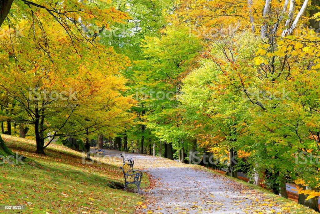 Fotografía De Bella Escena De Otoño Hojas Doradas árboles Amarillos