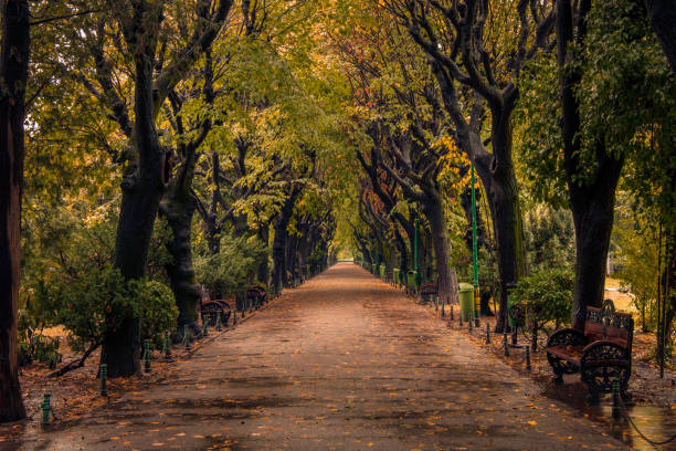 Beautiful autumn scene in a park on a rainy day with leaves on the ground stock photo