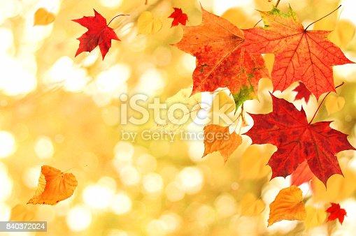 istock Beautiful Autumn themed background. Different multicolored dry maple leaves falling down with windy movement 840372024
