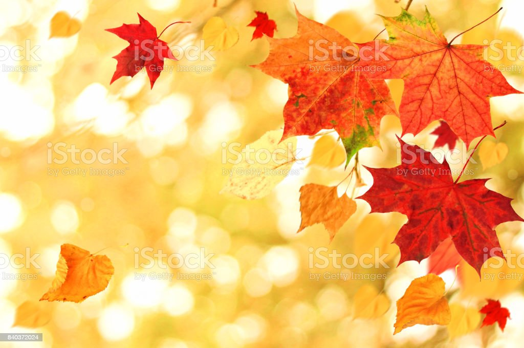 Beautiful Autumn themed background. Different multicolored dry maple leaves falling down with windy movement stock photo