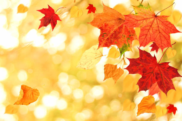 beautiful autumn themed background. different multicolored dry maple leaves falling down with windy movement - september stock photos and pictures