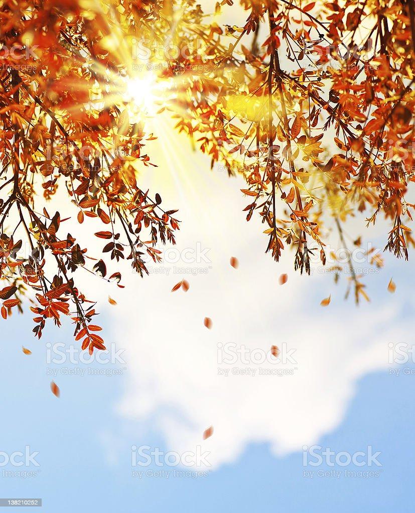 Beautiful autumn tree leaves background border royalty-free stock photo