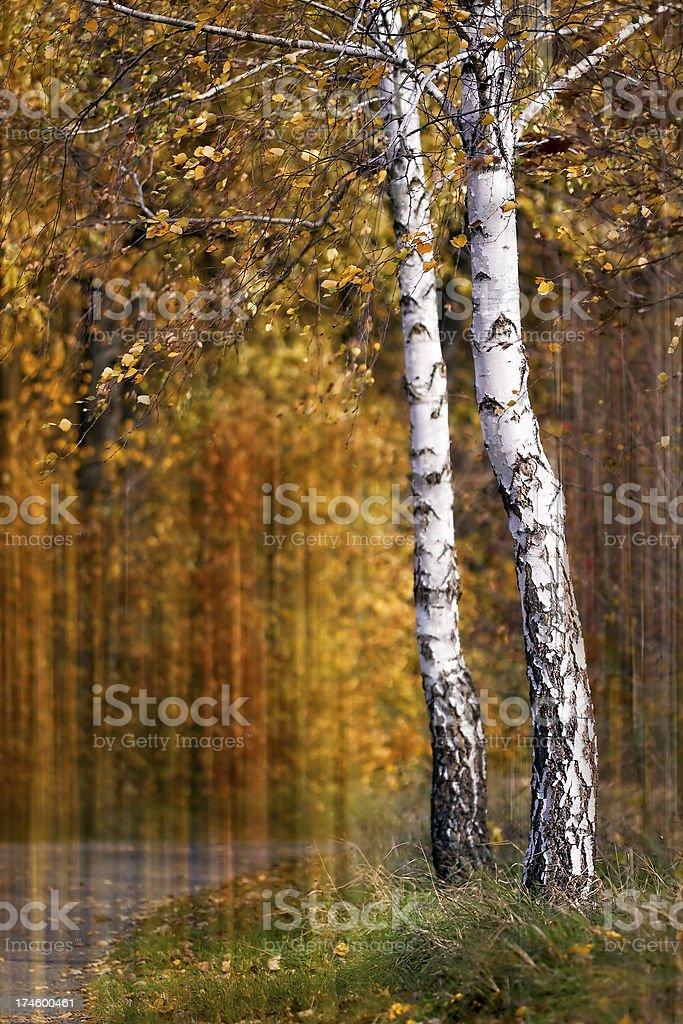Beautiful Autumn trees royalty-free stock photo