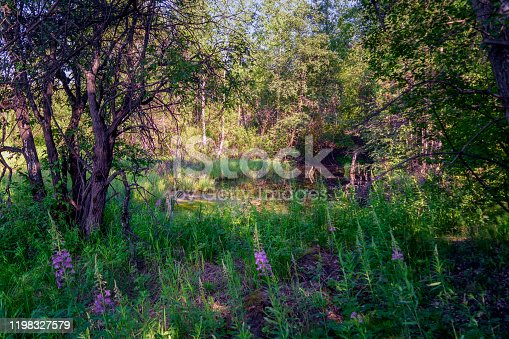 istock Beautiful autumn trees reflecting on the smooth water surface. Warm autumn day on the river. River bank landscape. 1198327579