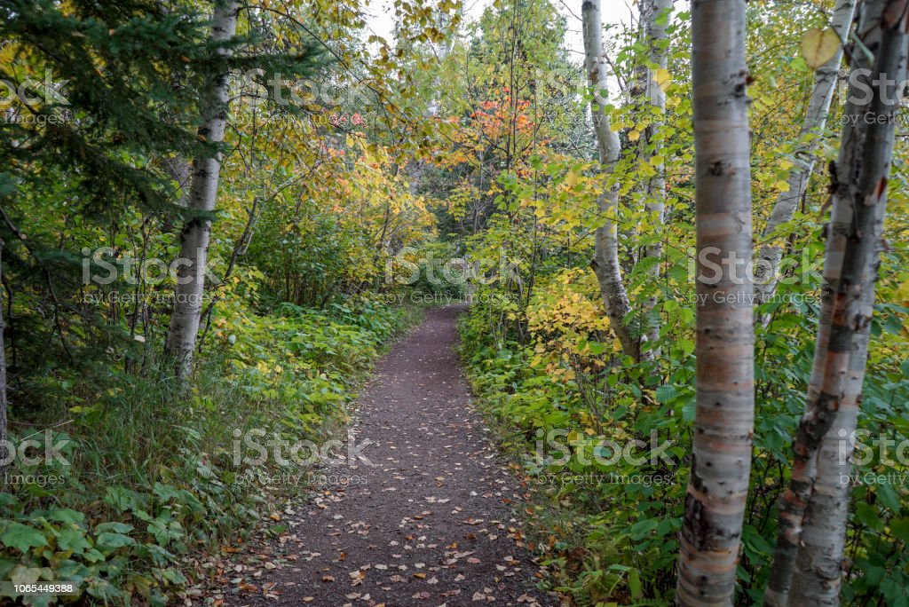 Beautiful Autumn Woods at Tettegouche State Park in Northern Minnesota stock photo