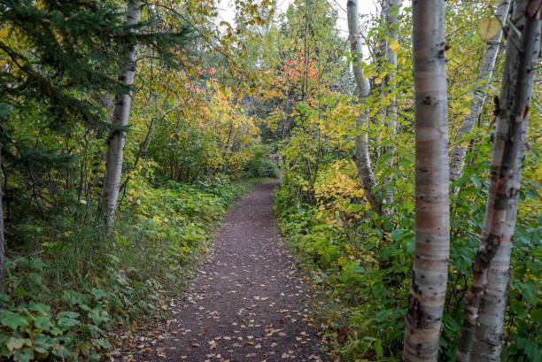Beautiful Autumn Woods at Tettegouche State Park in Northern Minnesota stock photo