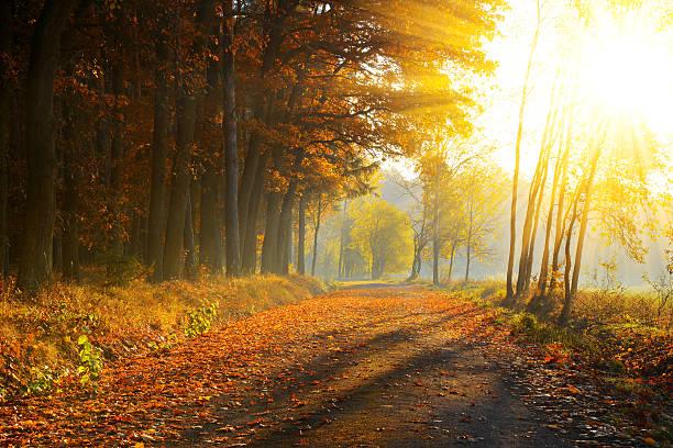 Beautiful autumnal park picture id606217490?b=1&k=6&m=606217490&s=612x612&w=0&h=wveceparpxbshgqrgfv 4bmcx1jzlge46wchirvg y8=
