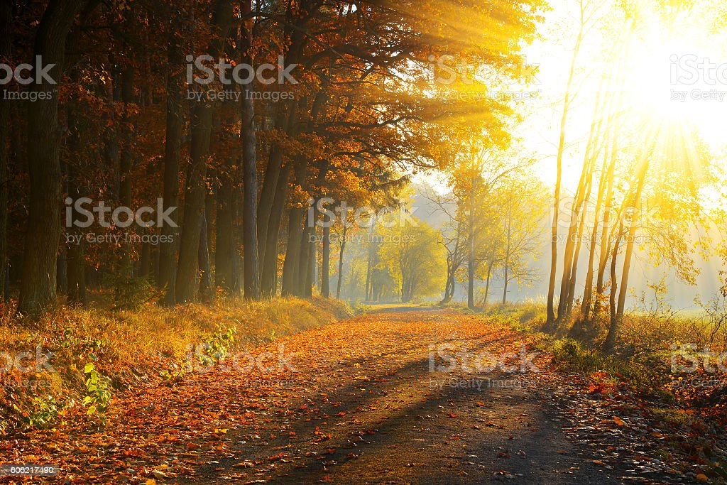 Beautiful Autumnal park stock photo