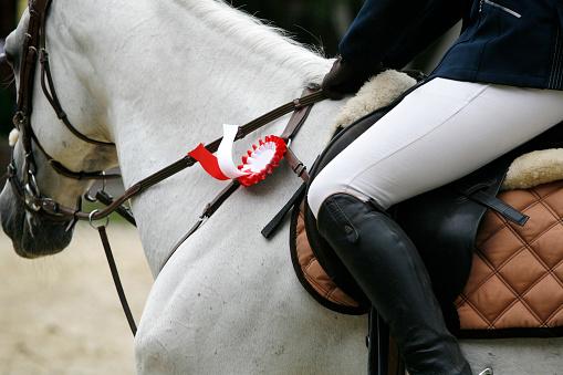 istock Beautiful award-winning horse galloping in the arena 509028376