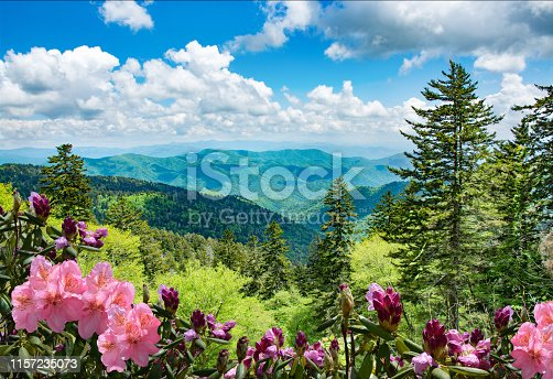 Beautiful azaleas blooming in mountains. Green hills,meadows and sky in the background. Summer mountain landscape. Near Asheville ,Blue Ridge Mountains, North Carolina, USA.