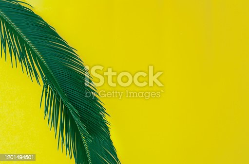 1153498948 istock photo Beautiful background in yellow with one palm branch. 1201494501