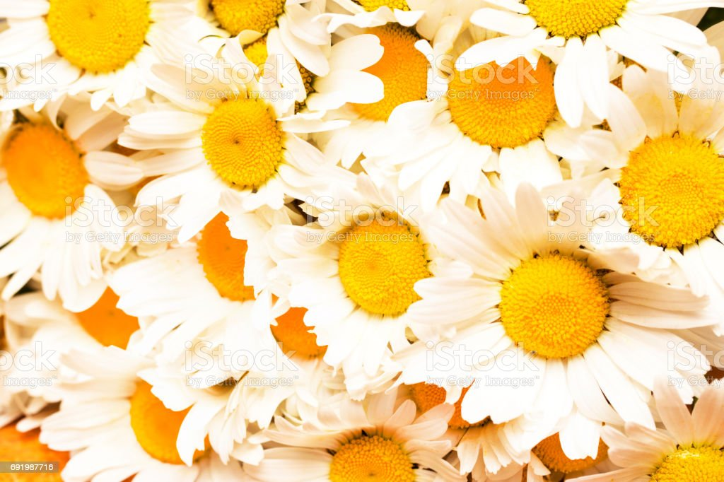 beautiful background of fresh flowers photographed in the studio stock photo