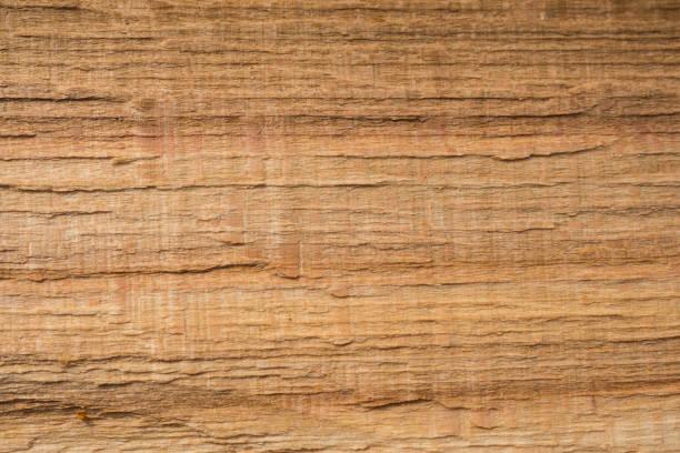 Schöner Hintergrund. Altes Holzmuster. Europäische Buche (Fagus sylvatica). – Foto