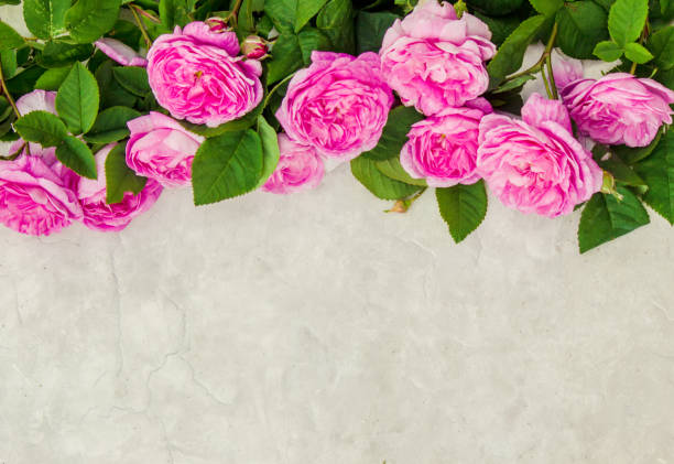 Beautiful background with pink roses selective focus picture id1057102378?b=1&k=6&m=1057102378&s=612x612&w=0&h=2g7ks10bwwwutmpmwuy29nzn5olpkiomjjci6dgwmc4=