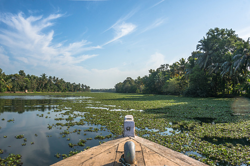 The nose of the boat floating on the river overgrown with green plants. The beautiful landscape of the backwaters in Alleppey Kerala, India