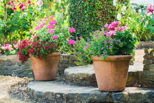Beautiful backyard floral garden picture id1059376074?b=1&k=6&m=1059376074&s=612x612&w=0&h=ujehlcfdoummwqruhis4vzjeijsxld7z3ybayb2xnyw=