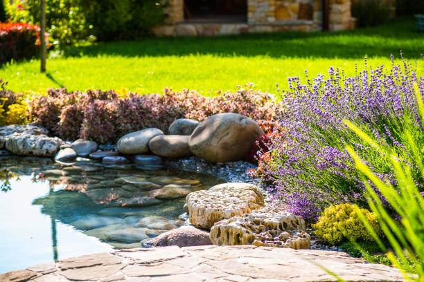 piękny projekt krajobrazu podwórku. widok kolorowych drzew i dekoracyjnych - staw woda stojąca zdjęcia i obrazy z banku zdjęć