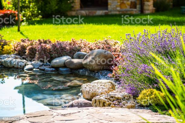 Photo of Beautiful backyard landscape design. View of colorful trees and decorative